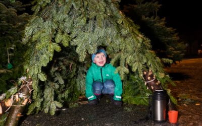 Juletrebyen Jørpeland glitrar fram til jul