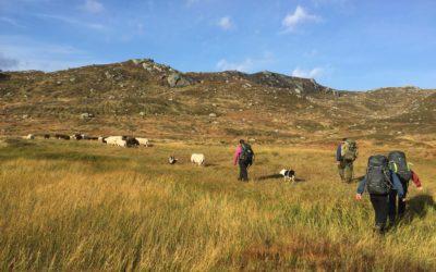 Fleire får fåresmaken av fjellet