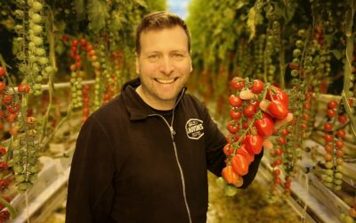 Våren er komen – tomatane er her!